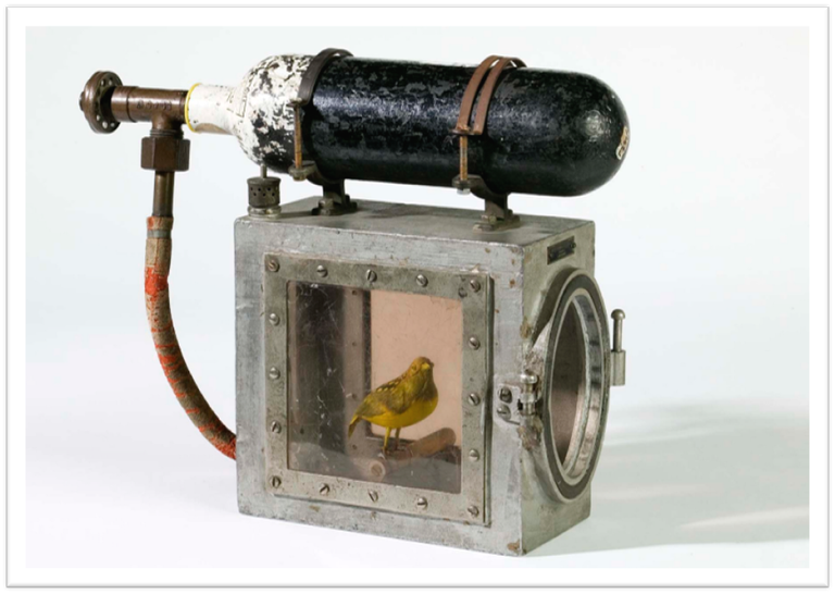 Resuscitation device for the canary